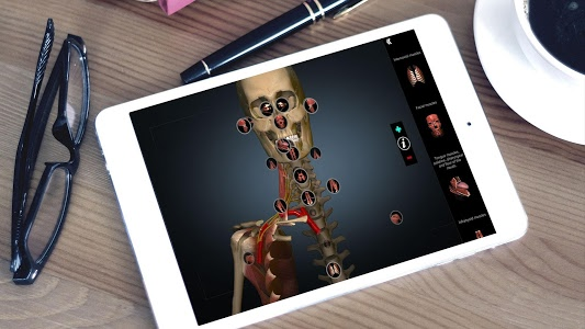 Download Anatomy Learning - 3D Atlas 2.1 APK