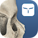 Download 3D Skull Atlas 1.1 APK