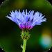 Download Blur Image - DSLR focus effect 1.18 APK