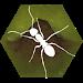 Download Finally Ants  APK