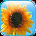 Download Jigsaw Puzzle Flower World 1 APK