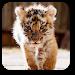 Download Little Tiger Live Wallpaper 1.0 APK
