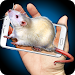 Download Mouse Hand Funny Joke 1.3 APK
