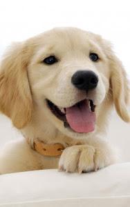 Download Puppies Live Wallpaper 18.0 APK