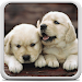 Download Puppies Live Wallpaper 18.0 APK