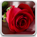 Download Rose Live Wallpaper 18.0 APK