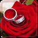 Download Roses Romantic live wallpaper 1.4 APK