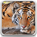 Download Tiger Live Wallpaper 18.0 APK